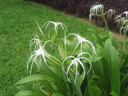 IMG_5882白い花.JPG